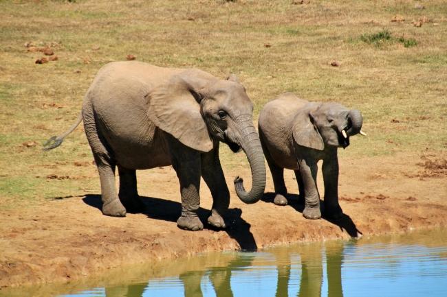 SUDAFRICA ESPECTACULAR