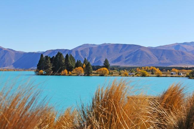 NUEVA ZELANDA RIMU  - ISLA SUR